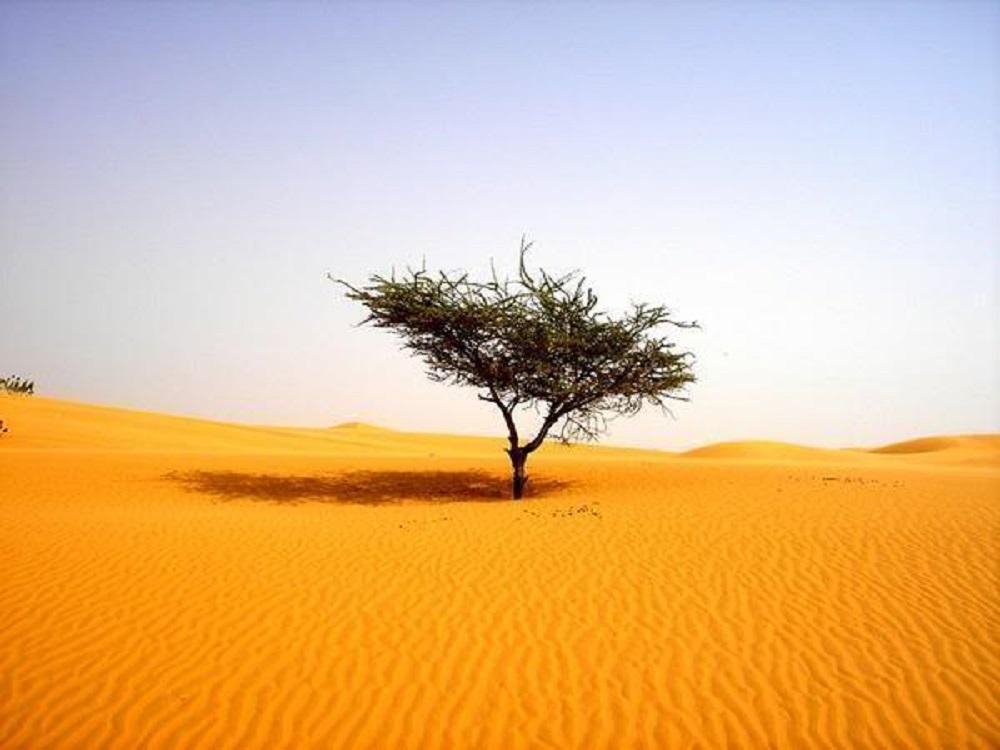 Albero nel deserto - tree in the desert