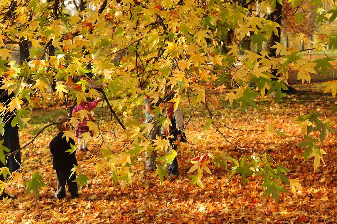autunno-michela-morando