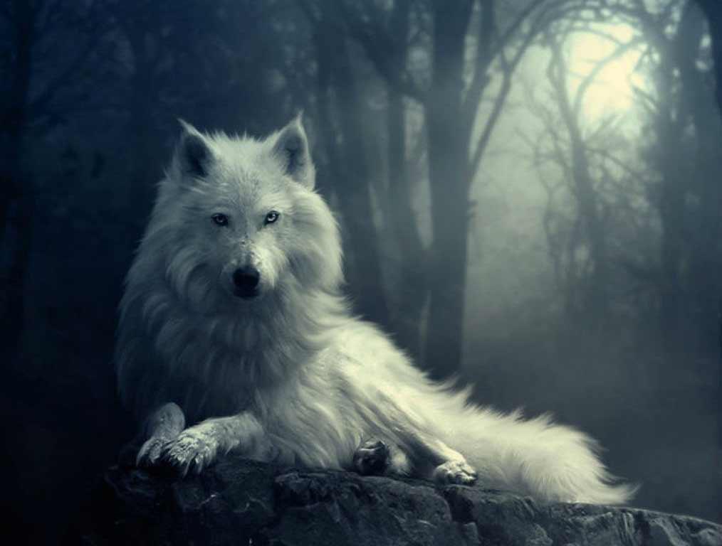 wolf-in-winter