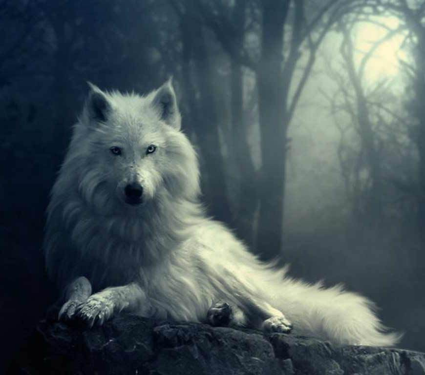 wolf-in-winter
