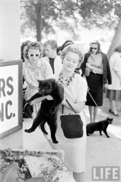 black-cat-auditions-hollywood-1961-3