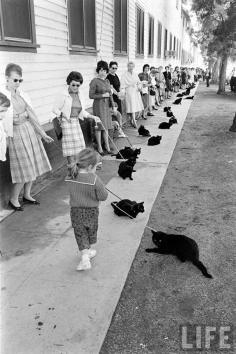 black-cat-auditions-hollywood-1961-6