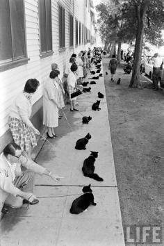 black-cat-auditions-hollywood-1961-7