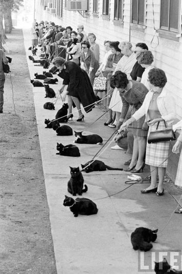 black-cat-auditions-hollywood-1961-8