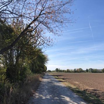Una delle sezioni del percorso ciclabile che collega Bamberga a Ebing (12 km circa)